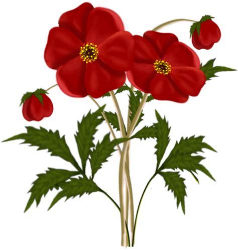 Transparent Red Flower