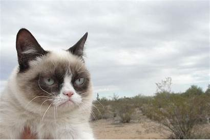 Grumpy Cat Angry Face Meme Funny Cats