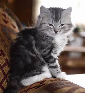 20 Best Of Small Cats for Sale
