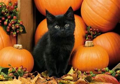 Halloween Cat Wallpapers Kitten Backgrounds Wallpaperaccess Berries