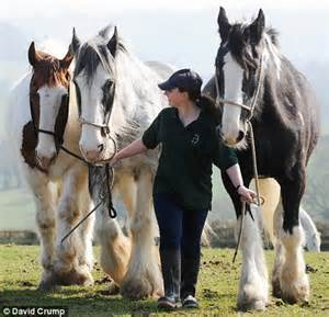 pet horses horse why crunch killing thousands credit them
