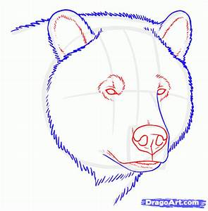 Draw Grizzly Bears, Step by Step, Drawing Sheets, Added by ...