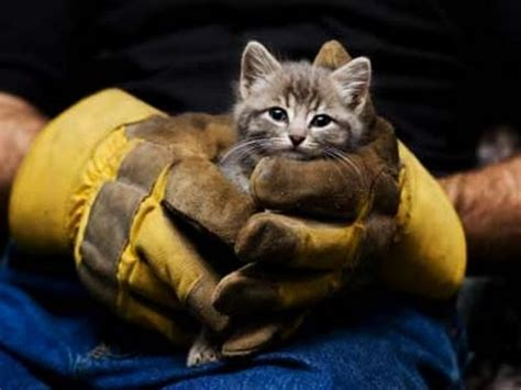 Animal Rescue Wallpaper - helps and saving animals lives 2017 real