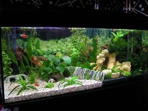 amazing aquarium decoration decorative pets pinterest With decorative fish tank ideas things to consider