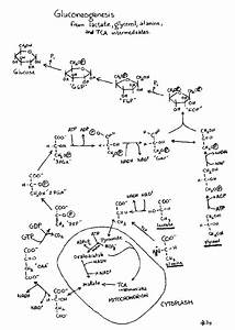 CHEM-643 Metabolic Pathway Resources