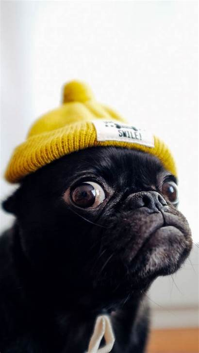 Pug Dog Hat Funny Galaxy Puppy Wallpapers