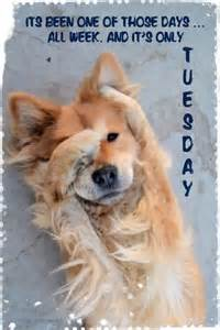 It S Only Tuesday Funny Dogs