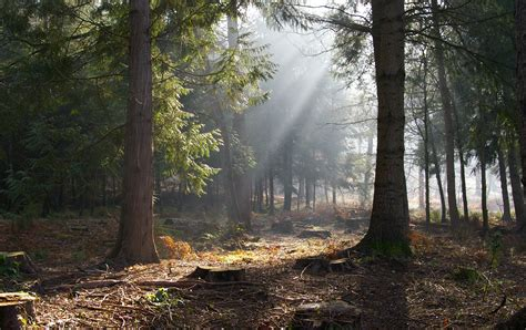 Forest Of Dean Beautiful Wallpapers  View World Beauty