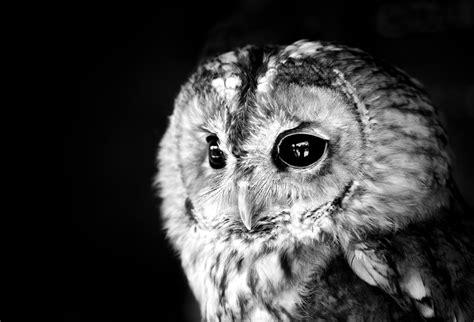 animals birds owl wallpapers hd desktop  mobile