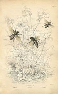 Vintage Printable - Honey Bees - Instant Art - The ...