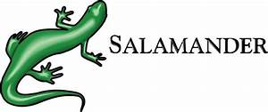 Salamander vector free download free vector download (10 ...