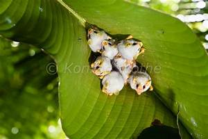 Costa Rica Moments Of Nature Konrad Wothe
