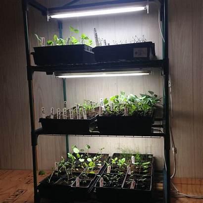 Grow Lights Mini Greenhouse Indoor Greenhouses Vegetable
