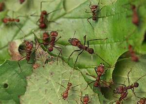 Was Essen Ameisen : zu eiwei reiches essen viele proteine verk rzen ameisen ~ Lizthompson.info Haus und Dekorationen