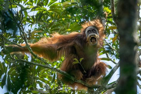 jungle animals  survive hostile jungle environments
