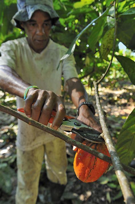 jochen weber cocoa  photographic documentary