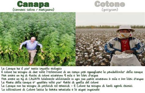 canapé de qualité canapa la pianta miracolosa ma e illegale perche i miliardari vogliono restare tali