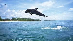 Schöne Delfin Bilder : logo malvorlagen ausmalen bilder schalke 04 logo malvorlagen ausmalen chainimage ~ Frokenaadalensverden.com Haus und Dekorationen