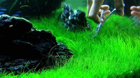 Aquascaping Tools by Just Aquascaping Flowgrow Aquascaping Tools Preview