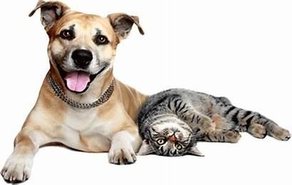 Pet Cat Dog Dogs Insurance Spain Happy