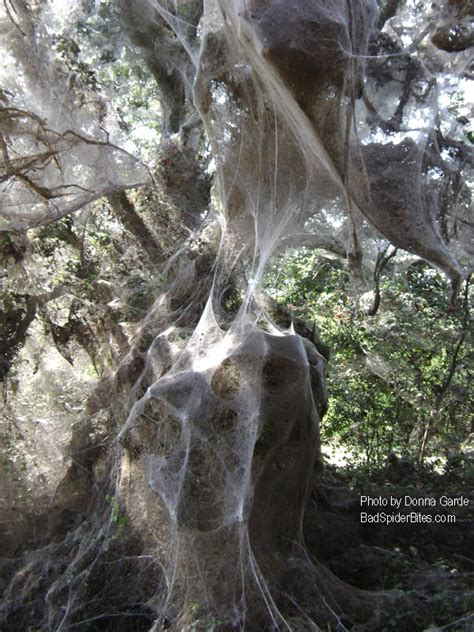 Giant Spider Webs  Badspiderbitesm. Ideas To Decorate Apartment On A Budget. Paint A Room App. Decorative Wood Trim. Drapes For Living Room. Decorative Filing Cabinet. Contemporary Living Room Sets. 3 Piece Living Room Set. Dining Room Table With Storage