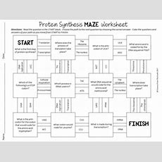 Protein Synthesis Maze Worksheet For Review Or Assessment Tpt