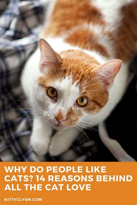 cats cat cartoon why kittyclysm reasons behind cool funny