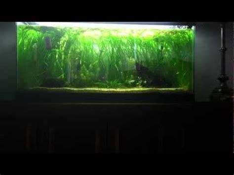 how to lower nitrates lucky bamboo nitrate filter for freshwater aquariums doovi