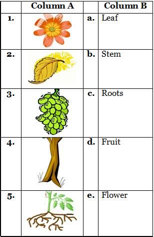 2nd class printable science worksheets for types of plants