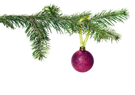 christmas tree branches clipart 22
