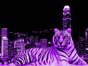 Purple Tiger Laying Behind the Big City. | Remarkable Mix ...