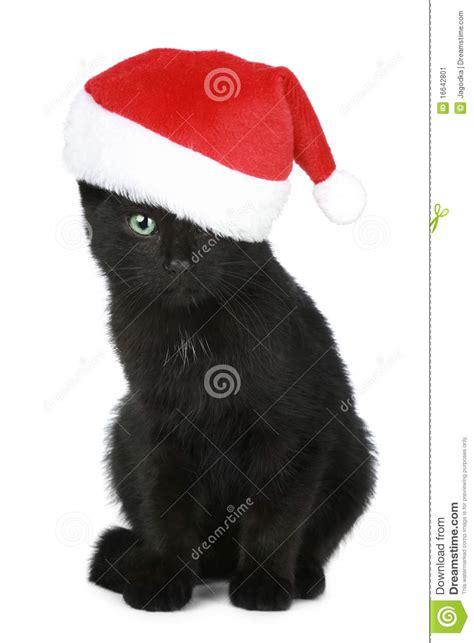 black kitten   christmas hat stock image image