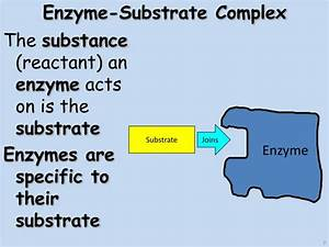 PPT - Enzymes PowerPoint Presentation - ID:2065223