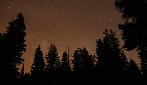 pine tree Silhouette | Star Filled Sky with Pine Tree ...