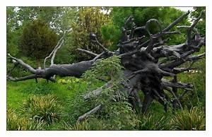 arbre des voyelles penone With jardin a la francaise photo 5 arbre des voyelles penone