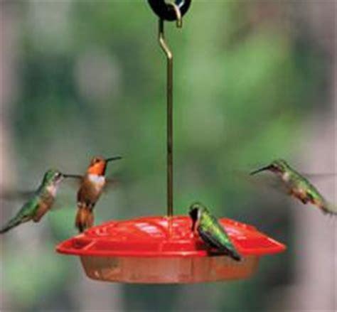 bees   hummingbird feederstips