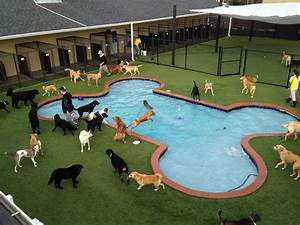 Pet paradise pet boarding pet sitting 125 ponce harbor for Dog home boarding near me