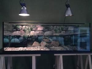 Tiere Für Aquarium : schildkr te aquarium 150cm zubeh r schildkr ten ~ Lizthompson.info Haus und Dekorationen