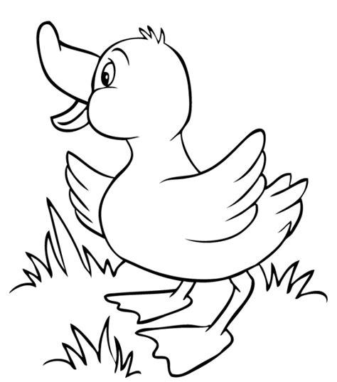 gambar bebek untuk mewarnai belajar mewarnai