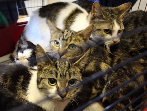 cats  dumped  yeovil west country itv news