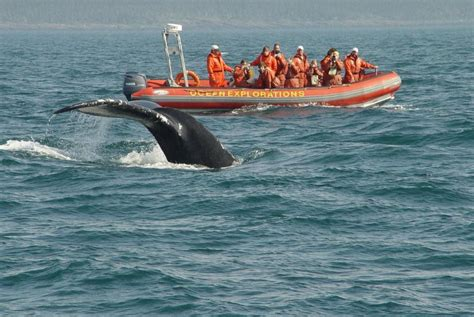 Whale Watching Tours On The Bay Of Fundy