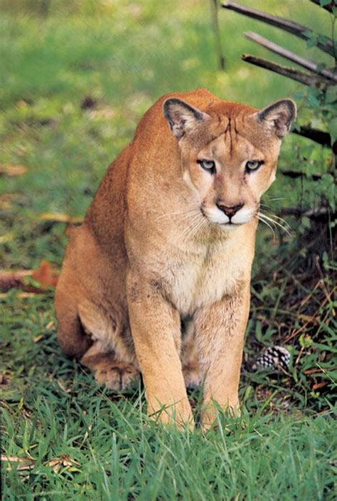 Crowded Florida Panthers May Find New Home Central