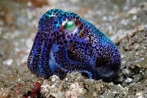 Happy Cephalopod Awareness Day | bluejayblog