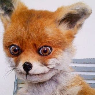 Stoned Fox Meme - stoned fox meme generator