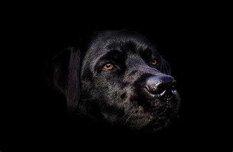 black dog quotes quotesgram