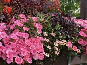 Balkon Ideen Pflanzen : blumen f r balkonk sten sonnig nxsone45 ~ Lizthompson.info Haus und Dekorationen