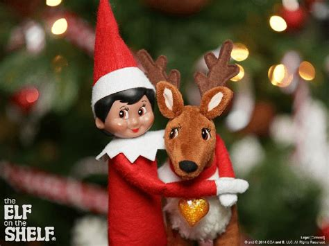 on the shelf reindeer 52 best images about meet the pets on