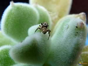 Plante Succulente Espèces Représentatives : photo araign e sur plante succulente ~ Nature-et-papiers.com Idées de Décoration