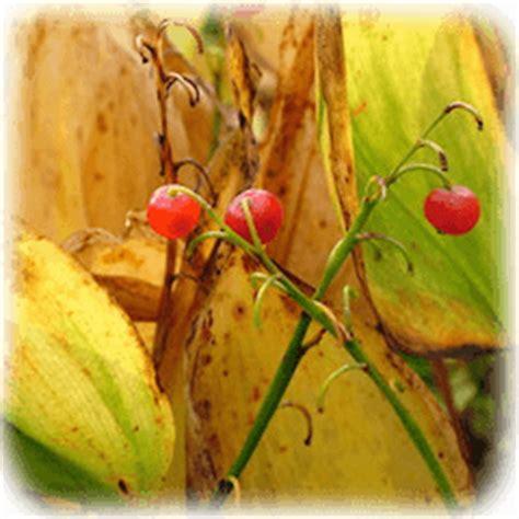 unbedenkliche pflanzen für katzen sch 228 dliche pflanzen katzenhilfe bremen ev