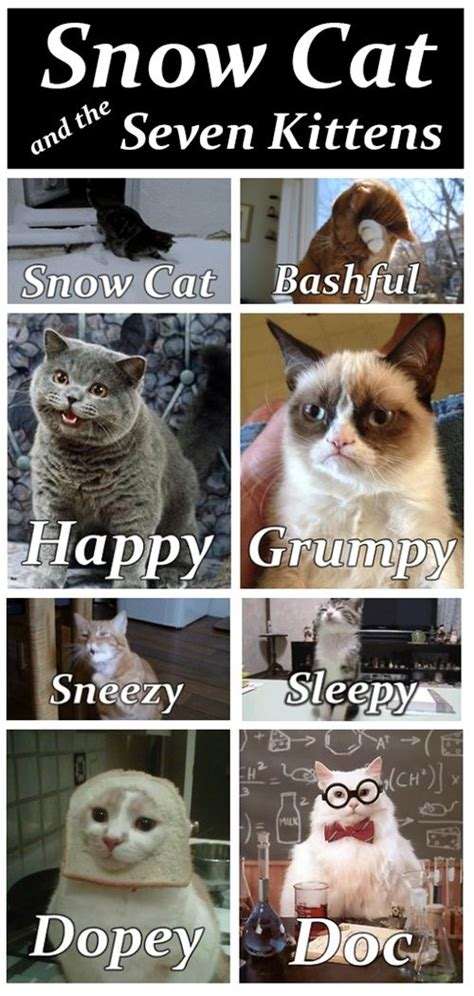 Grumpy Cat Snow Meme - 214 best images about funny cat stuff on pinterest cats funny cat pictures and cat memes